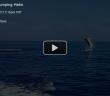 Mako Shark Jumping