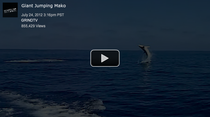 Mako Shark Flying Out of the Water