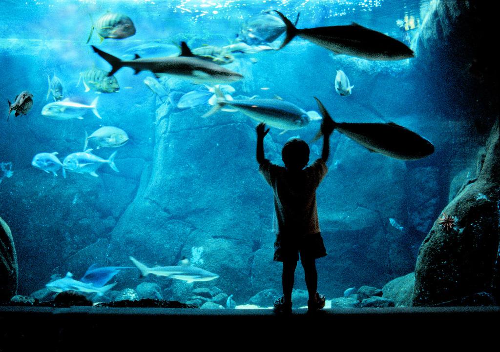 ワイキキ水族館