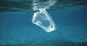 Plastic Bag ban in Hawaii