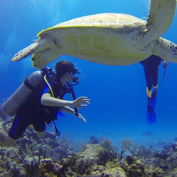 The Best Scuba Diving Spots in Hawaii