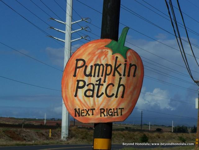 Pics From the Aloun Farms Pumpkin Patch