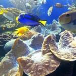 Waikiki Aquarium. Photo Credit: Ruth Kongaika