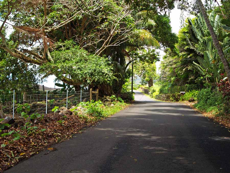 The Best Way to Experience The Road to Hana and Beyond